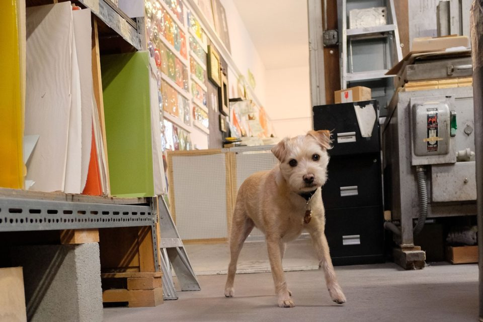 Biscuit, the Higgins Glass dog wandering about the studio